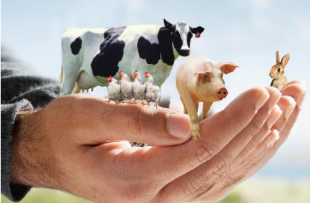 Protocolo de inspección de bienestar animal durante el sacrificio